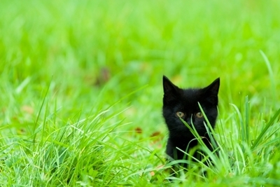 STOCK PHOTO - Kitten Hiding